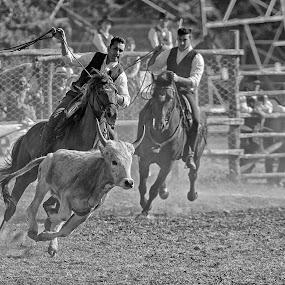 La Merca by Mauro Rotisciani - Sports & Fitness Rodeo/Bull Riding ( cowboy, cavallo, black and white, butteri, horse, rodeo, cow, galoppo )
