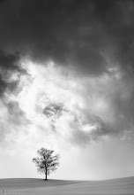 Photo: My favourite tree in Biei, just across from the Parent and Child trees. I emphasized the dramatic sky here with a Silver Efex Pro black and white conversion.