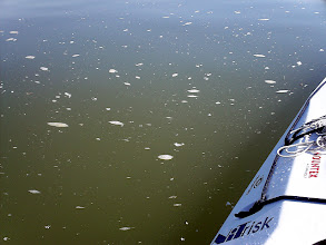 Photo: Több napig rettentő piszkos a víz
