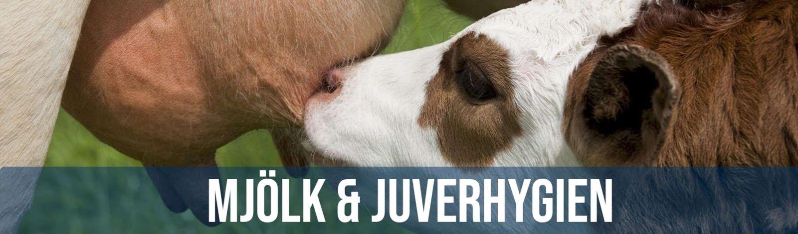Mjölk- & juverhygien
