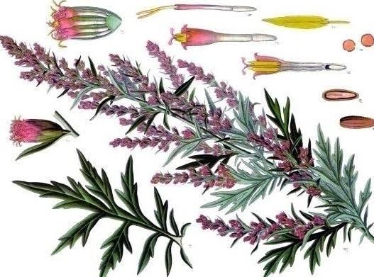 Mugwort Calming Herb Tea Blend Recipe