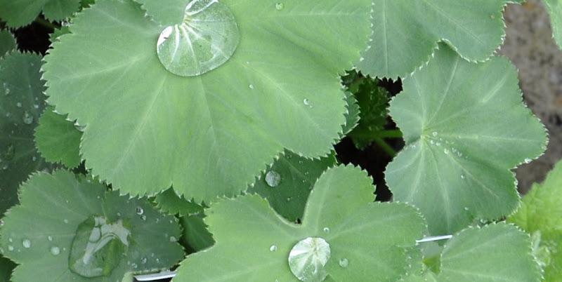 Photo: fab' foliage, a garden classic