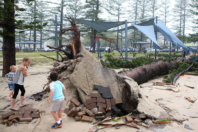 Photo: GOLD COAST, AUSTRALIA - JANUARY 28:  Children look at a fallen tree in Burleigh Heads as Queensland experiences severe rains and flooding from Tropical Cyclone Oswald on January 28, 2013 in Gold Coast, Australia. Hundreds have been evacuated from the towns of Gladstone and Bunderberg while the rest of Queensland braces for more flooding.  (Photo by Chris Hyde/Getty Images)