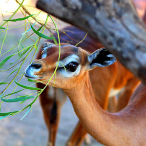 by Jennifer Watkins Odom - Animals Other Mammals (  )