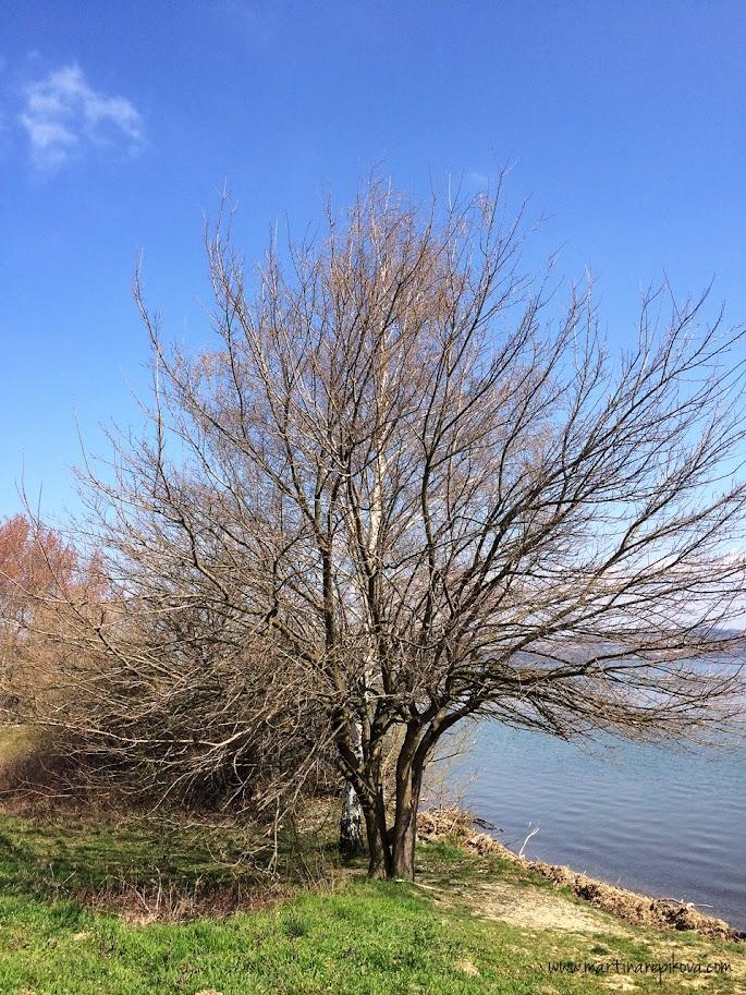 Tree around Sĺňava lake, Piešťany, Slovakia