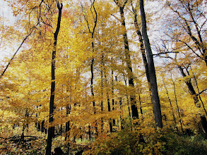 Photo: Glowing autumn forest at Hills and Dales Metropark in Dayton, Ohio.
