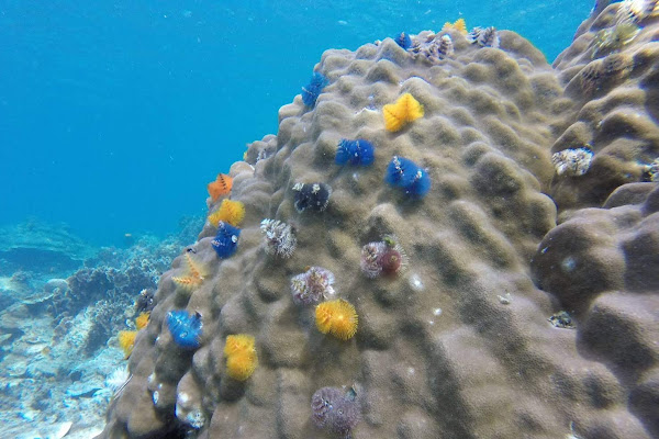 Spot colourful corals