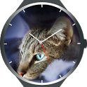 Cats Watch Faces icon