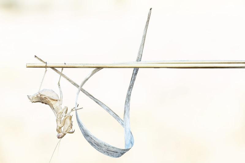 Equilibrista..... di stefanogaleotti