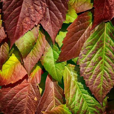 Le foglie sono dolci carezze di ocram69