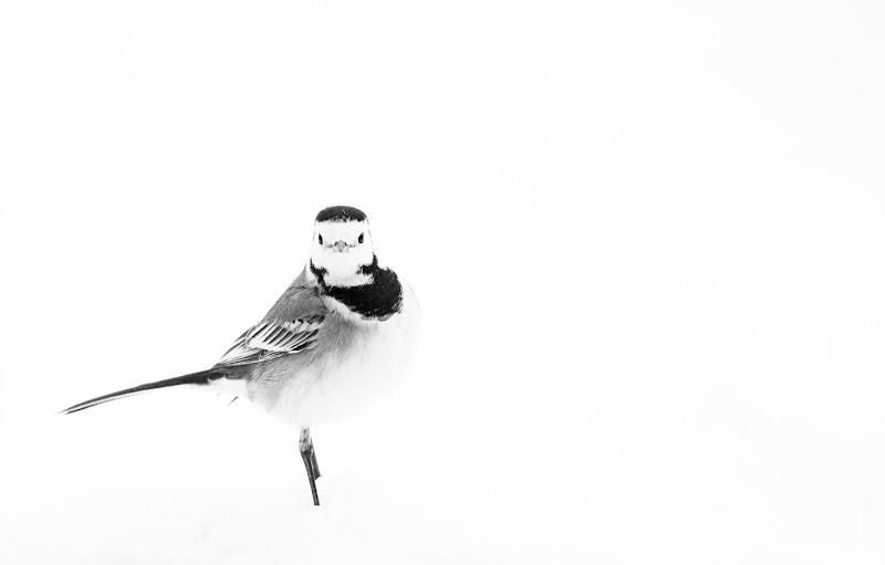 Ballerina di MauroV