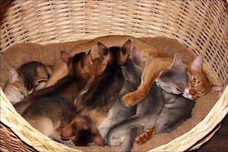 Photo: Куча братиков и сестричек