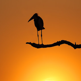 End of day by Sue Green - Animals Birds (  )