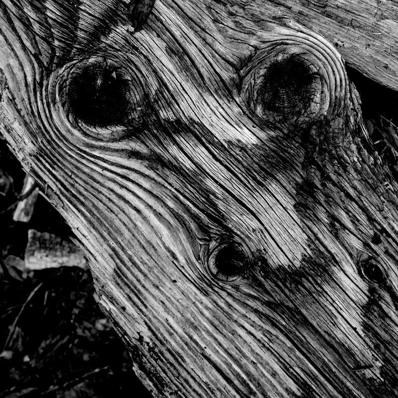 l'uomo nel legno di Angelo Artuffo
