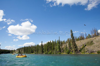Photo: Bald eagle flying by on whitewater rafting trip on the Chilko River. British Columbia, Canada.