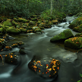 Squally Creek  by Jonathan Wheeler - Landscapes Waterscapes ( nantahala national forest, mountain streams, scenic north carolina, blue ridge mountains, squally creek )