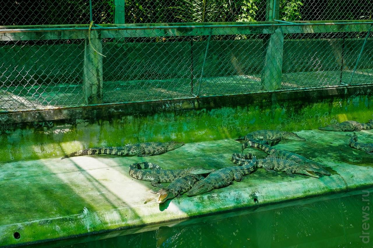 Крокодильчики подогреваются