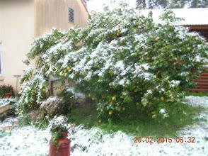Photo: שלג בעמיעד, פברואר 2015. צילום שלמה גולן