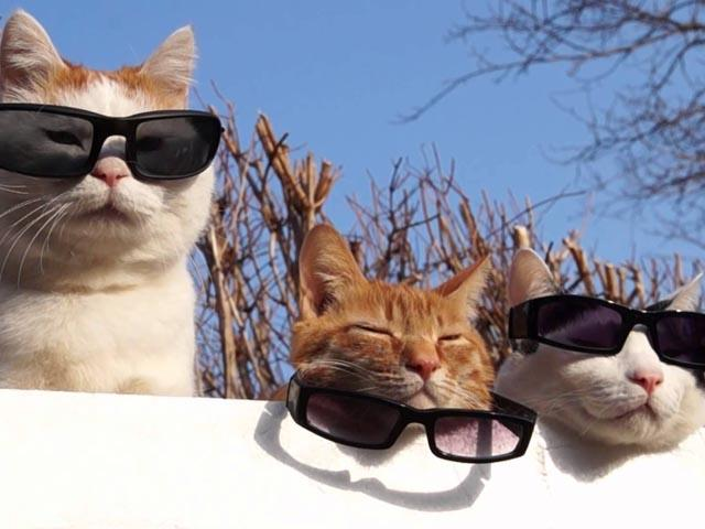 cool cats wallpapers android apps on google play