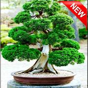 600+ Bonsai Tree Design Ideas icon