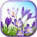 Spring Live Wallpaper App icon