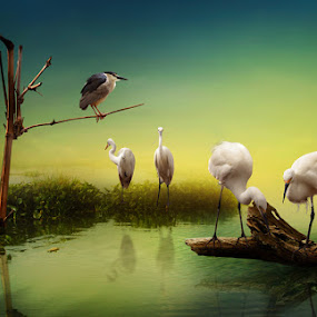BIRDS by Zainal Arifin  - Digital Art Things