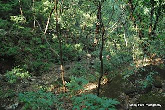 Photo: Javaliche Khore (Jungle)....