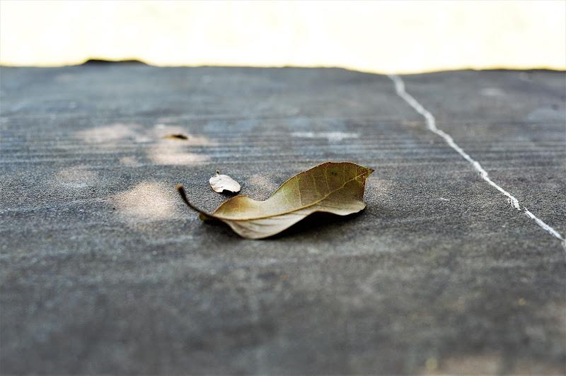 foglie  di Tiz