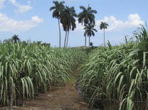 Photo: Sustainable Sugarcane Initiative (Sistema de Caña de Azúcar Sostenible - SiCAS) Mayo 4, 2012 [Photo by Rena Perez]