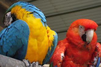 Foto: Tillsammans så var de en riktig färgklick!