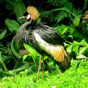 Angry bird by Ariniwinda Hapsari - Animals Birds ( bird, animals, park, tree, nature, green, tropical, bird of paradise )