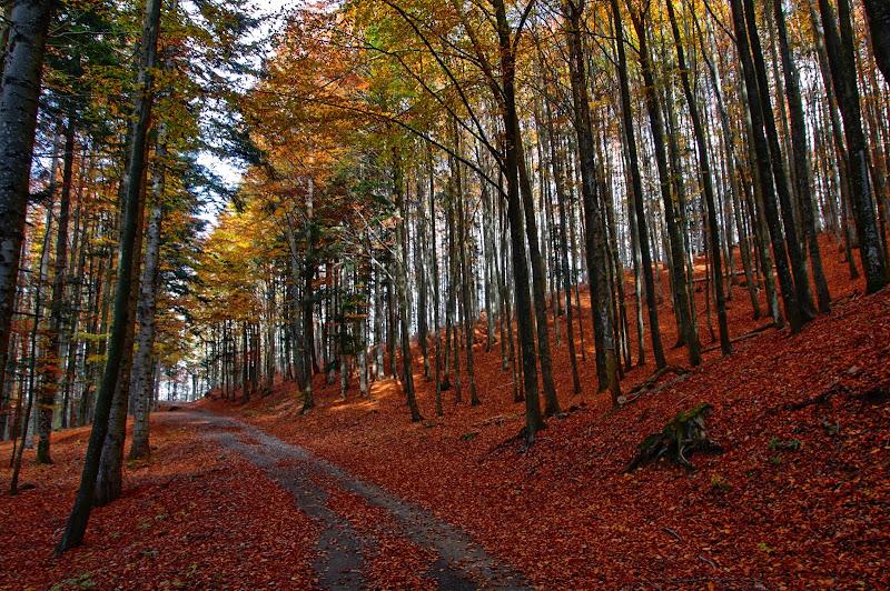 Nella foresta del Penna di maurizio_longinotti