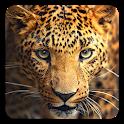 Wild animals Live Wallpaper icon