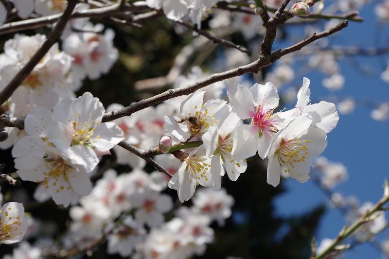 Effetto_primavera di @Virginia_Billè