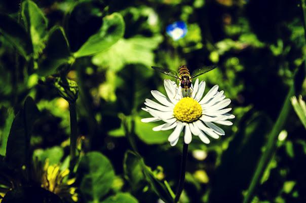 flower power di Fmscr