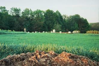 Photo: łąkta dolna 306