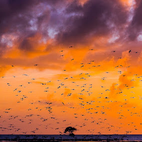 Flamingo Bay Sunset | Everglades National Park, FL by James Pion - Landscapes Sunsets & Sunrises