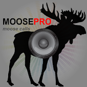Moose Calls for Hunting Moose