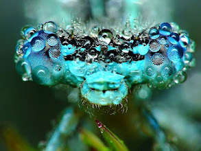 Photo: What would you name this photo? Check out more dazzling dew-covered insects: http://www.livescience.com/15626-gallery-dazzling-photos-dew-covered-insects.html