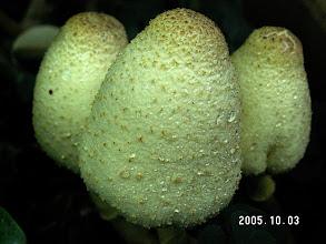 Photo: Fungus in a flower pot, Manoa