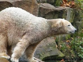 Photo: Knut ueberlegt ;-)