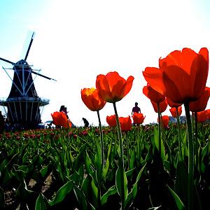 flower_garden.jpg
