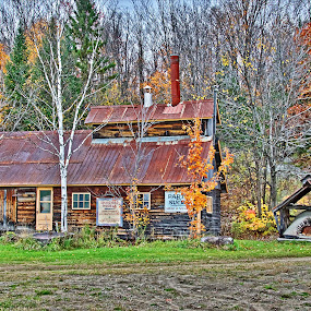 Sugar Shack by Rebecca Roy - Buildings & Architecture Decaying & Abandoned ( countryside, autumn, forest, old building, decaying, country, decay, abandoned,  )
