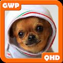 Chihuahua Fondos QHD icon