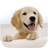Wallify - Pets Wallpapers (Buzzsharer)