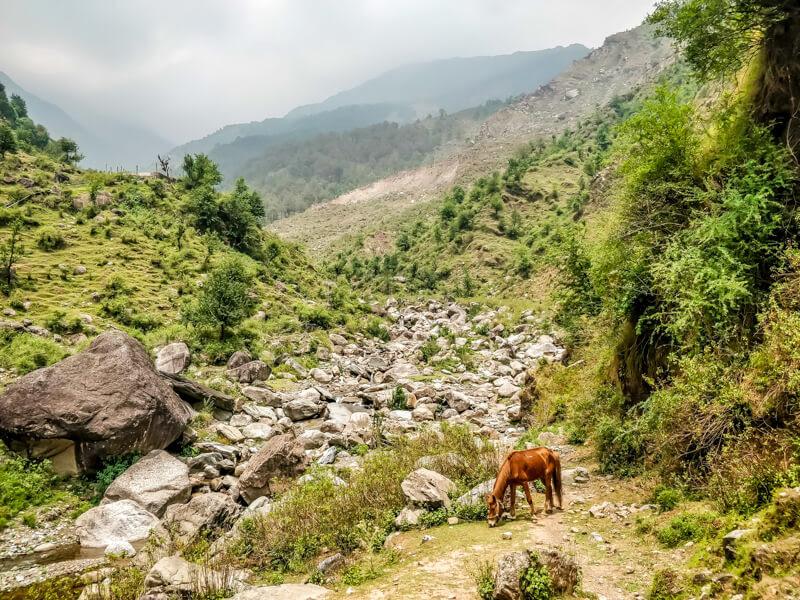 horse+grazing+bhagsu+valley+village+himachal+india