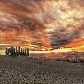 Cipressi in Val d'Orcia by Pasquale Bimonte - Landscapes Mountains & Hills