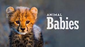 Animal Babies thumbnail