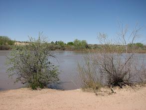 Photo: The Rio Grande in ABQ.