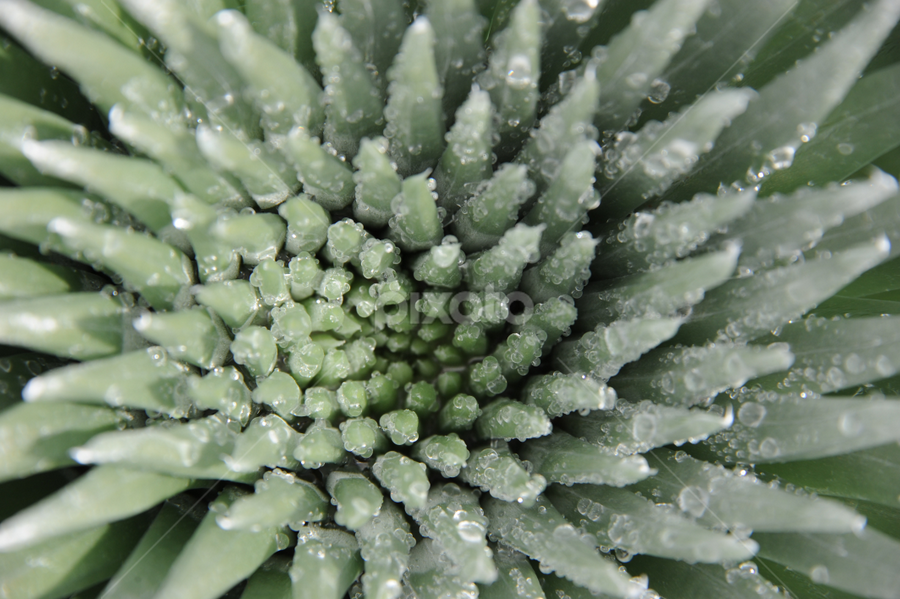 Close Up by Alexandria Shankweiler - Nature Up Close Leaves & Grasses ( water, desert, ice, dew, green, cactus )